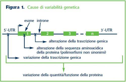 Cause di variabilità genetica