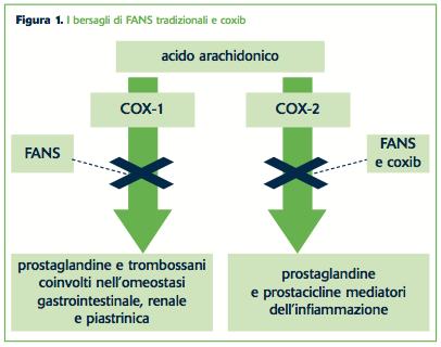 Figura 1. I bersagli di FANS tradizionali e coxib