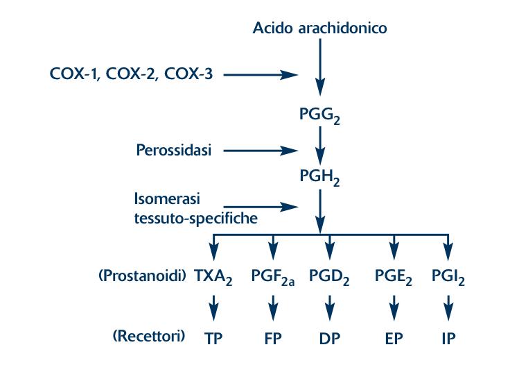Dall'acido arachidonico ai prostanoidi (modificata da 3)