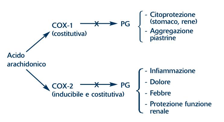 Effetto dell'inibizione (X) dei FANS su COX-1 e COX-2 (modificata da 3)